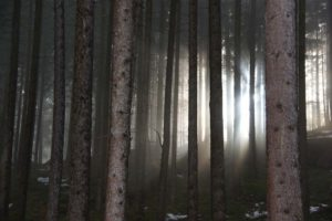 Wald-im-Testel