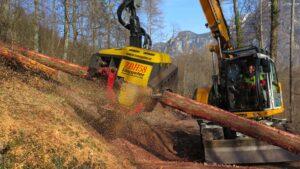 Holzerntearbeiten